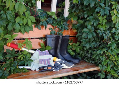 Lopper, garden secateurs, leather gloves and rubber boots on the bench prepared for fruit trees pruning in the autumn garden