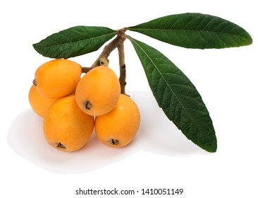 Loquat (L. Eriobotrya japonica) fruit with green leaves isolated on a white background.