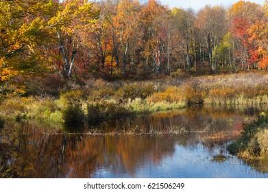 The Lord's Autumn Paintbrush.   Gouldsboro State Park in Pennsylvania