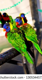 Lorikeet birds sitting on a pole also called Trichoglossus haematodus. Lorikeets originate from Australia and  Indonesia.