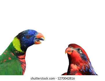 Lorikeets, two rainbow lorikeets and on red lorikeet are seen together in a colorful photograph. Area for text.