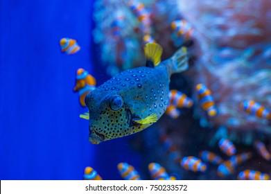 Loro Park dweller- nice color this fish