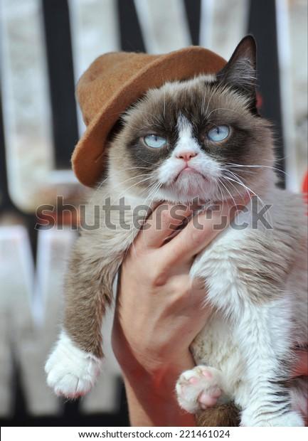 LOS ANGELES, CA - APRIL 13, 2014: Grumpy Cat at the 2014 MTV Movie Awards at the Nokia Theatre LA Live.