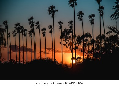 Los Angeles, CA / United States Feb/20/18: Beautiful sunset with some palm trees.