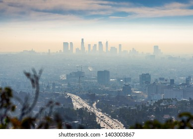 LOS ANGELES, CALIFORNIA - FEB 13: Sunrise towards a smog ridden Los Angeles downtown from Hollywood hills with shrub in foreground.  LA is well known for its Hollywood film district.