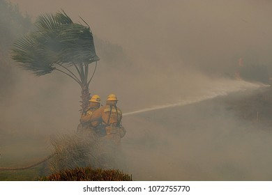 Los Angeles, California/ USA- Nov 15, 2008: Firefighters fight a wildfire in heavy winds and smoke during the Sayre Fire, which burned in the Granada Hills section of Los Angeles.