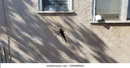 """Los Angeles, CA/USA - Aug 2019: Bug on window screen. Apartment Infestation. Summertime. Bugs. Grasshopper. Window Screen. Grasshopper on window screen. Keep bugs out. San Fernando Valley bugs."""