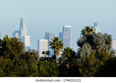 LOS ANGELES - MAY 26, 2020: Aerial view of Downtown Los Angeles in background and palms and trees in foreground