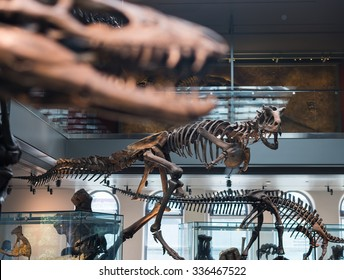 LOS ANGELES - NOVEMBER 1: Dinosaur hall in Natural History Museum of Los Angeles County. November 1, 2015 in Los Angeles, CA