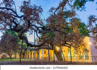 Los Angeles, OCT 5: Night view of The 400 years old Engelmann Oak in Caltech on OCT 5, 2016 at Los Angeles, California