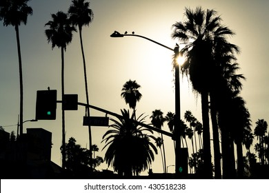 Los Angeles palms silhouette, Hollywood, California
