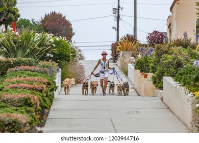 LOS ANGELES, USA - JUNE 28, 2012: woman guides the dogs as dog sitter on a morning walk at a dog leash. Dog sitting is necessary for many people with jobs.