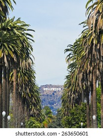 Los Angeles, USA - March 24, 2015: Beautiful palm tree lined street with the famous tourist landmark hollywood sign framed in between.