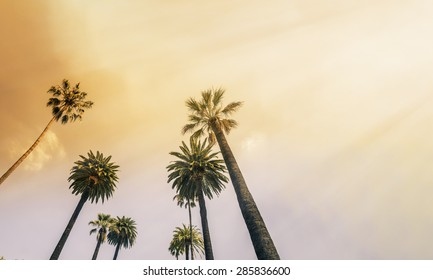 Los Angeles, West Coast Palm Tree Sunshine
