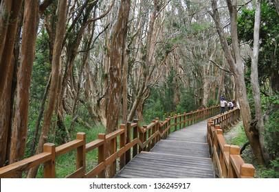 Los Arrayanes National Park.San Carlos de Bariloche. Argentina.