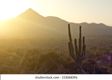 Los Cabos, Mexico. Landscape during the sunset with cactus and beautiful mountains.