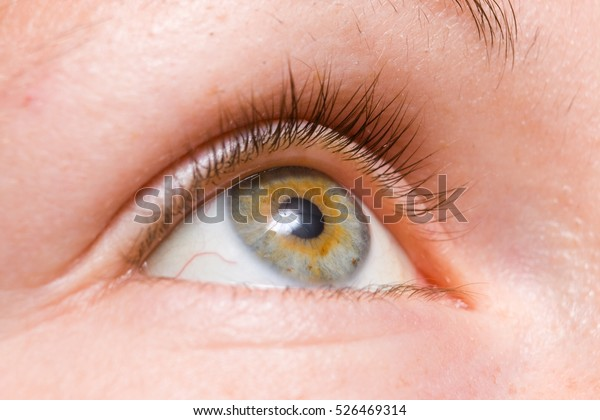 lose-up macro of beautiful female eye with perfect shape eyebrows