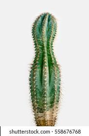 losing weight cactus