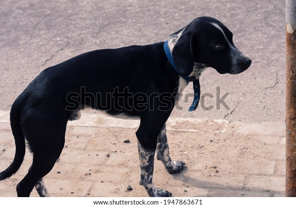 lost-black-skinny-dog-unknown-600w-19478
