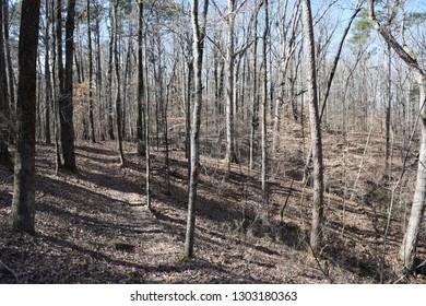 The Lost Bluff Trail near Grenada Mississippi