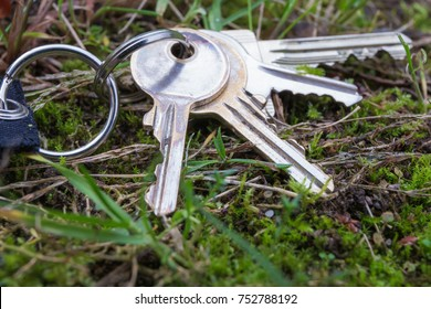 a lost bunch of keys lies in the grass