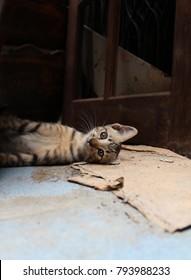 Lost Cat on street