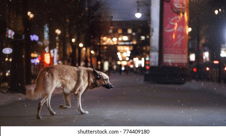a lost dog walks around the city on New Year's holidays alone. St. Petersburg, Russia, December 16, 2016