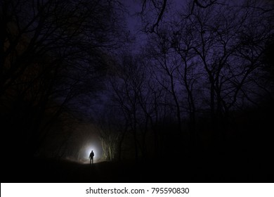lost in the forest after dark