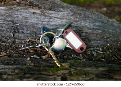 Lost keys on the tree