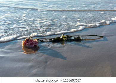 Lost Love, Lost rose laying on the beach, Byron Bay Australia