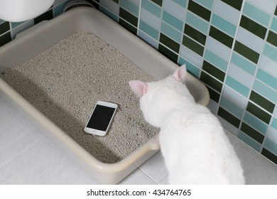 Lost Phone.Forget the phone in cat toilet .