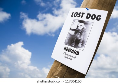 lost puppy poster on a light post