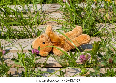 Lost toy bear lying on a wooden platform