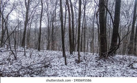 """Lost In The Woods"" Shot on Kodak Pixpro AZ252"