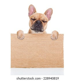lost,homeless  dog with cardboard ,isolated on white background, closed eyes looking so sad