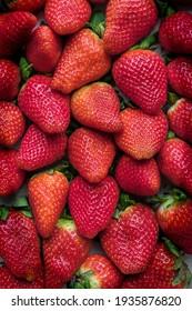 Lots of beautiful freshly picked strawberries