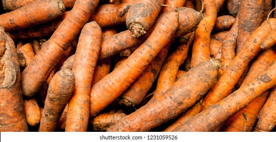 lots of carrots. Lots of raw carrots close up. Big pile of fresh carrots from farm, carrot in a supermarket. Fresh organic carrots. Background texture
