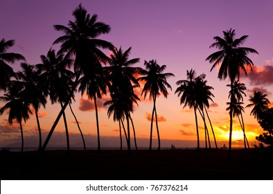 Lots of coconut palm trees at an Antiguan beach, a beautiful sunset as background. The island on the horizon is Montserrat.