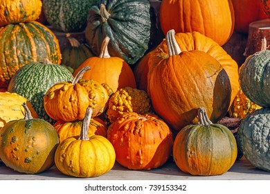 Lots of colorful decorative pumpkins