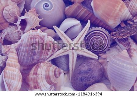 lots-different-seashells-starfish-mixed-
