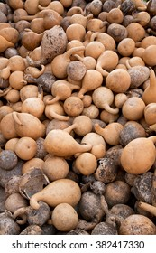 Lots of dry calabashes