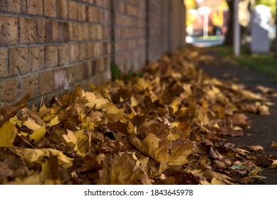 Lots of fallen autumn brown leaves on the sidewalk beside the brick wall. Focus on foreground. Beautiful fallen maple leaves. Copy space. Ballinteer, Dublin, Ireland