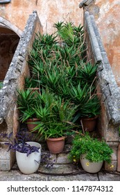 Lots of floer pots on a small stairs in Agia Triada Tzagaroli Monastery, Crete,Greece. Monks are taking great care of the area of the monastery.