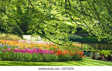 Lots of flowers in the park on a sunny day in spring