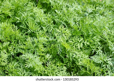 lots of fresh dill