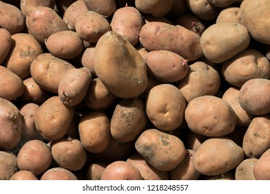 Lots of fresh potatoes. Harvested potatoes ready to be cooked and eaten