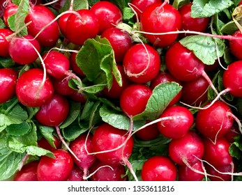Lots of fresh ripe radishes at market