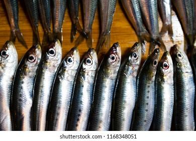 Lots of fresh sardines