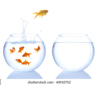 lots of goldfishes in a bowl and yellow goldfish jumping to a better place