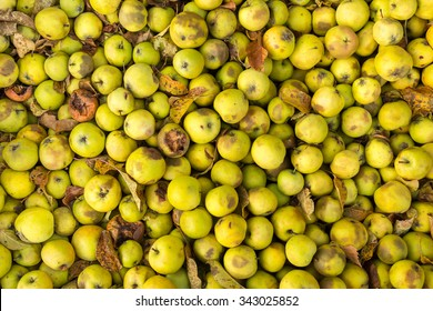 Lots of green apples in an autumnal setting